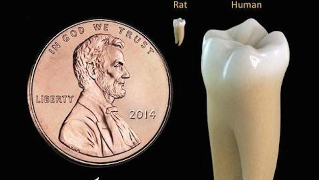 dientes3--478x270