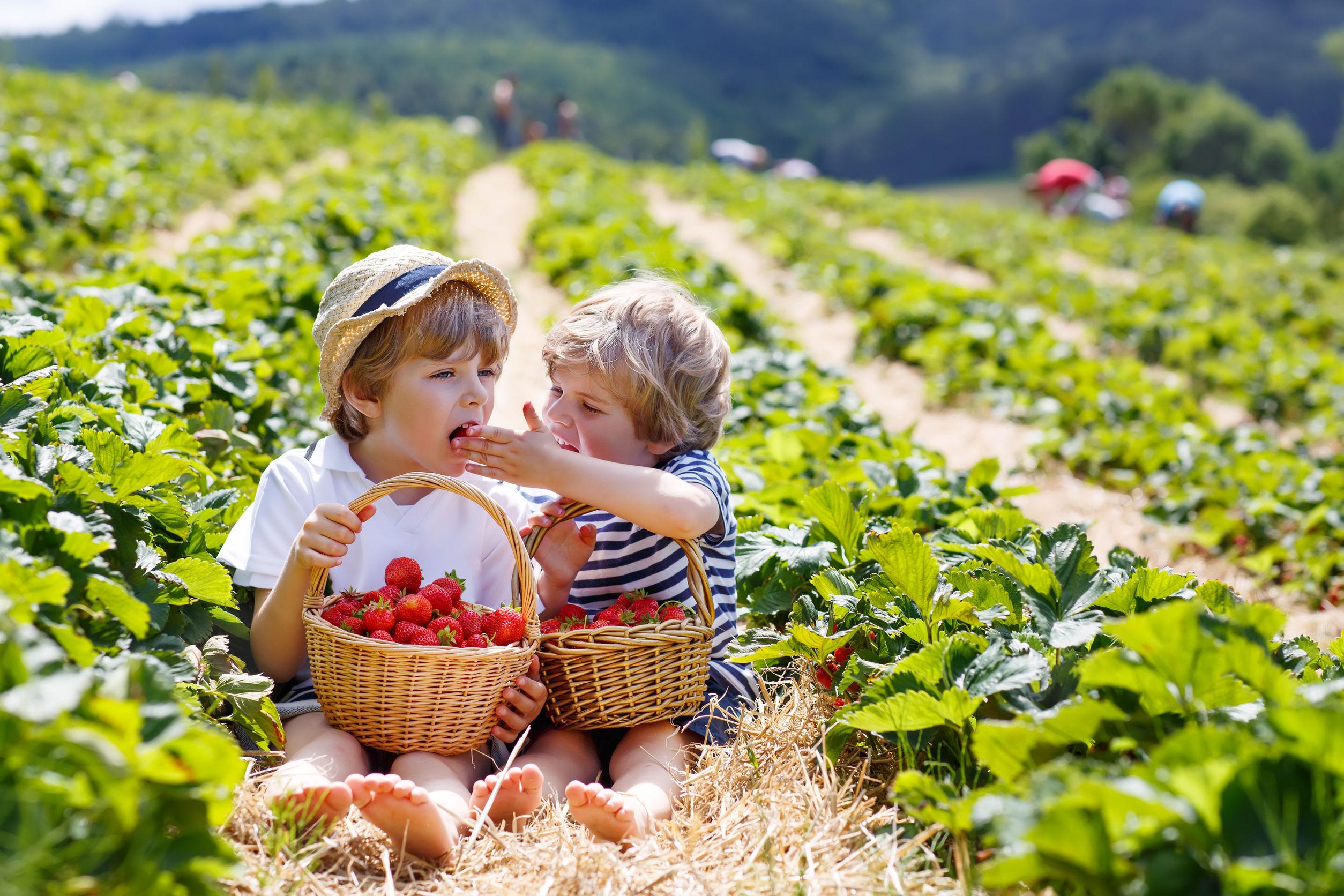 Fresas saludable